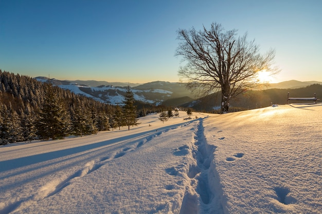 Beautiful winter christmas landscape. human footprint track path in crystal white deep snow in empty field, spruce trees forest, hills and mountains on horizon on clear blue sky copy space background.