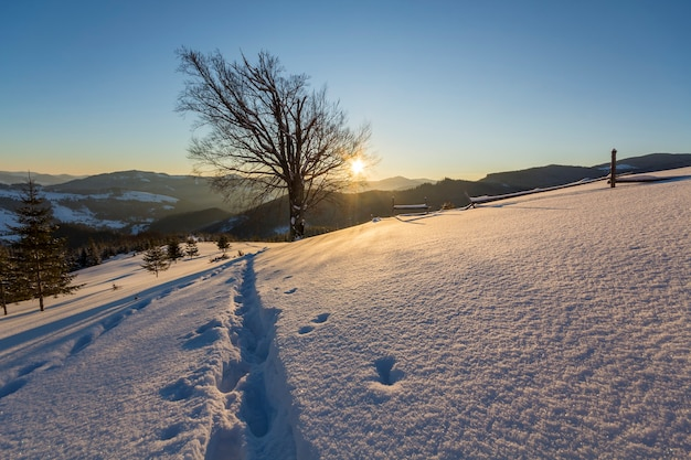 Beautiful winter christmas landscape. human footprint track path in crystal white deep snow in empty field, spruce trees forest, hills and mountains on horizon on clear blue sky.