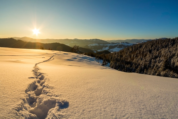 Beautiful winter christmas landscape. human footprint track path in crystal white deep snow through empty field, woody dark hills on horizon at sunrise on clear blue sky copy space background.