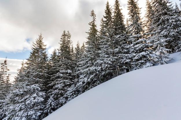 Красивый зимний сказочный горный пейзаж. высокие темно-зеленые сосны, покрытые инеем на крутом склоне с кристально-белым чистым снегом на ярко-синем небе с пухлыми белыми облаками.