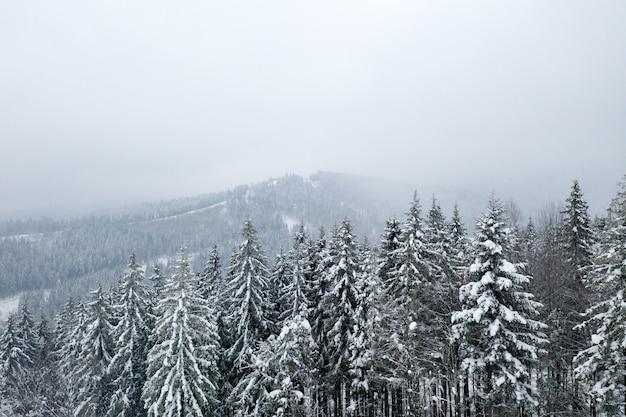 美しい冬の森と山々