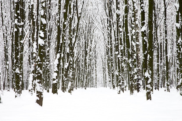 아름다운 겨울 숲과 길
