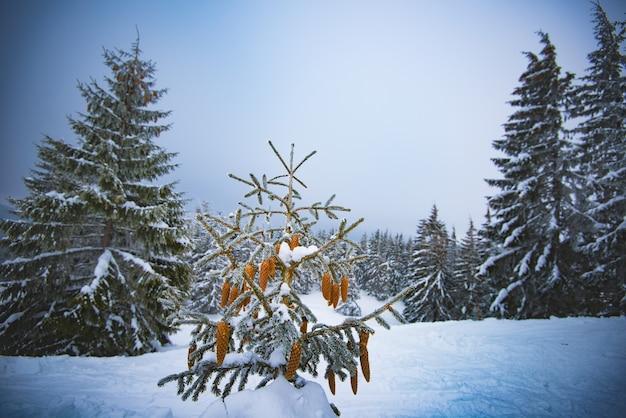 丘の上の冬の森に小さなモミの木が生えている美しい冬の森の風景