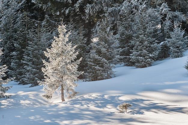 밝고 화창한 날, 풍경에 눈 덮인 나무와 아름다운 겨울 숲