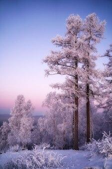 山の美しい冬の風景。日没。