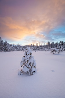 Красивый зимний пейзаж снег дерево