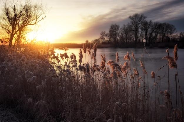 아름다운 겨울 풍경. 나무의 가지가 흰 서리로 덮여 있습니다. 안개가 자욱한 아침 일출. 화려한 저녁, 강이나 호수 위의 밝은 햇살.