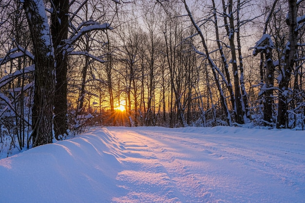 Beautiful winter landscape with dawn