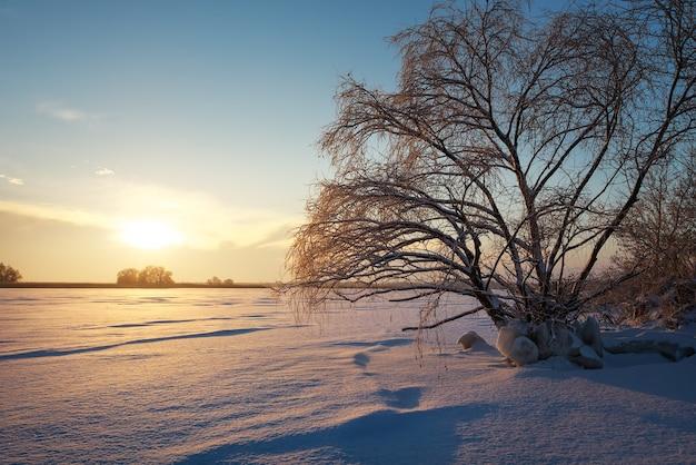Красивый зимний пейзаж с замерзшим озером, большим деревом и закатным небом