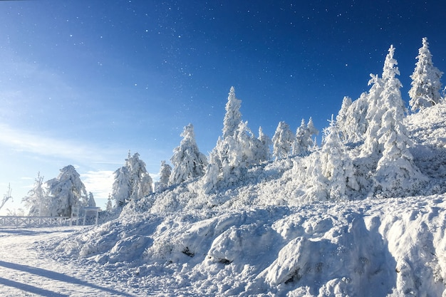 Beautiful winter landscape with snow covered trees on a blue sky