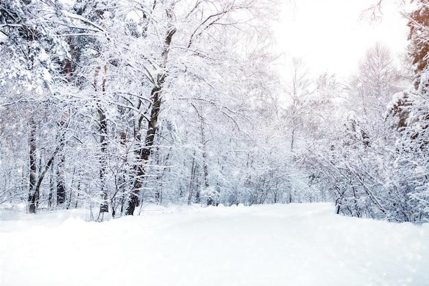 雪に覆われた木々の美しい冬の風景。明けましておめでとうございます。メリークリスマス