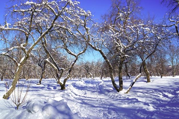 雪に覆われた木々の美しい冬の風景