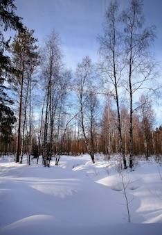 雪、松、白樺、太陽のある美しい冬の風景。