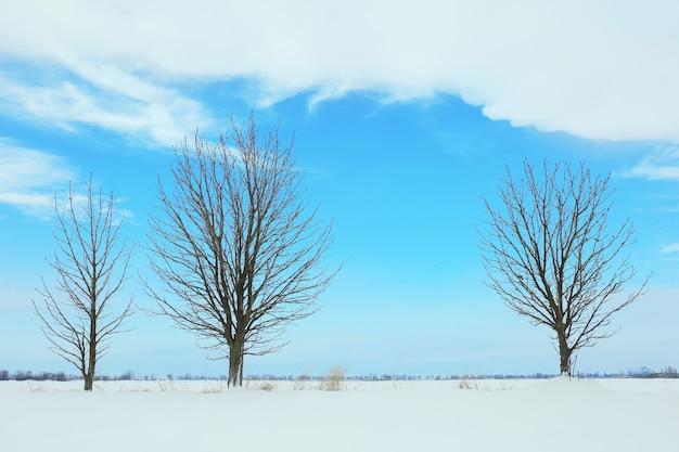 青い空を背景に木々と美しい冬の風景 Premium写真