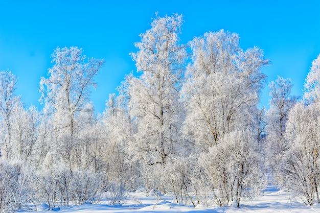 Красивый зимний пейзаж с белыми замороженными деревьями