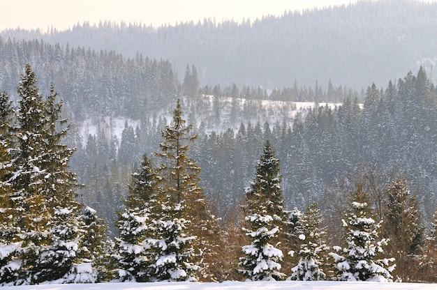 Красивый зимний горный пейзаж. сосновый лес, покрытый снегом. зима в горах