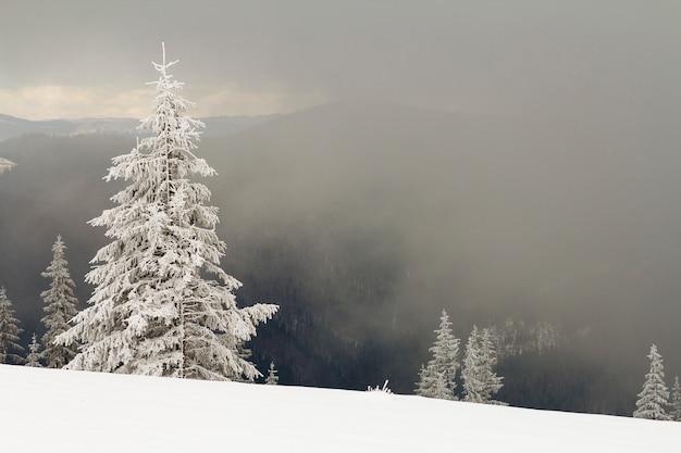아름다운 겨울 산 풍경입니다. 키 크고 어두운 상록 소나무 어두운 숲의 복사 공간 배경에 추운 화창한 날에 눈과 프 로스트로 덮여 있습니다. 자연 개념의 아름다움.