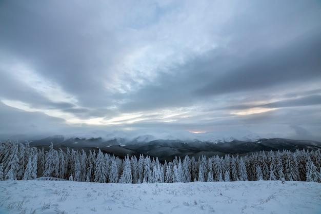 美しい冬の山の風景。背の高い濃い緑のトウヒの木は、山の頂上と曇り空を背景に雪で覆われています。
