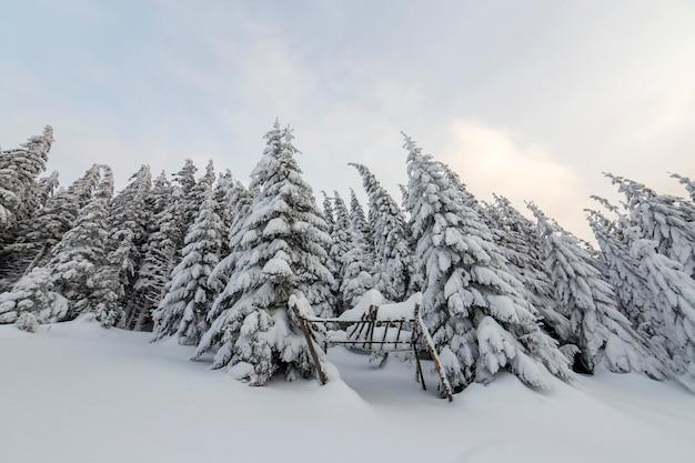 美しい冬の山の風景。背の高いトウヒの木は冬の森と曇り空を背景に雪で覆われています。