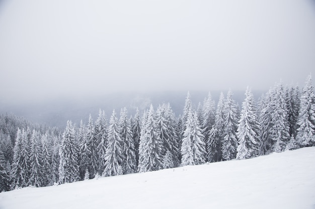 Beautiful winter mountain landscape. winter landscape with fresh snow in a mountain forest