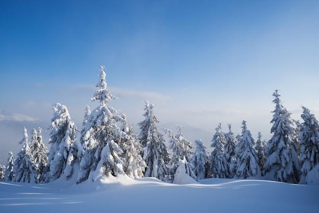 雪の中でもみのある美しい冬の自然。森の風景。もやのある晴れた天気