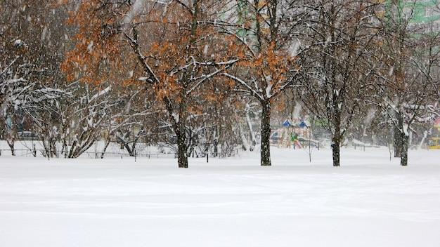 美しいウィンターパーク。木に降る雪。公園の地面は雪で覆われていました。冬のシーズンのコンセプト。