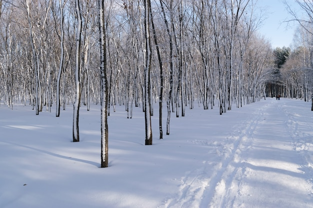 Красивый зимний парк в снегу. морозный и солнечный день