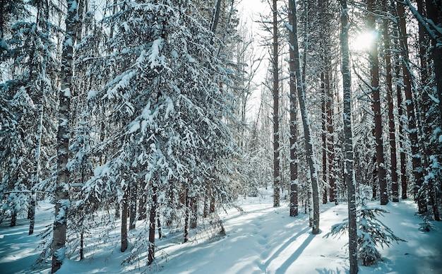 숲의 태양과 눈이 있는 아름다운 겨울 시골 풍경.