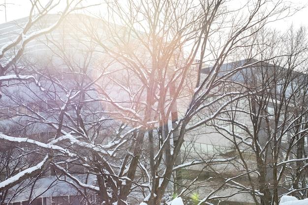 Beautiful, winter snow in sapporo, hokkaido, japan