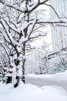 Beautiful winter and snow in sapporo, hokkaido, japan