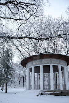 Красивый зимний снежный пейзаж в парке
