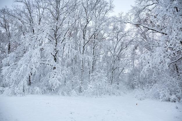 공원에서 아름 다운 겨울 눈 덮인 풍경