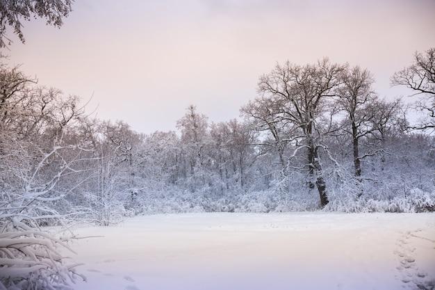 공원에서 아름다운 겨울 눈 덮인 풍경