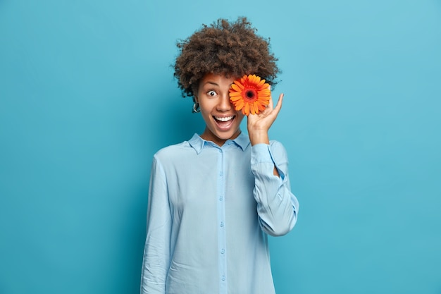 Beautiful woman covers eyes with fragrant orange gerbera or daisy flower wears festive shirt isolated over blue wall has natural beauty perfect smile