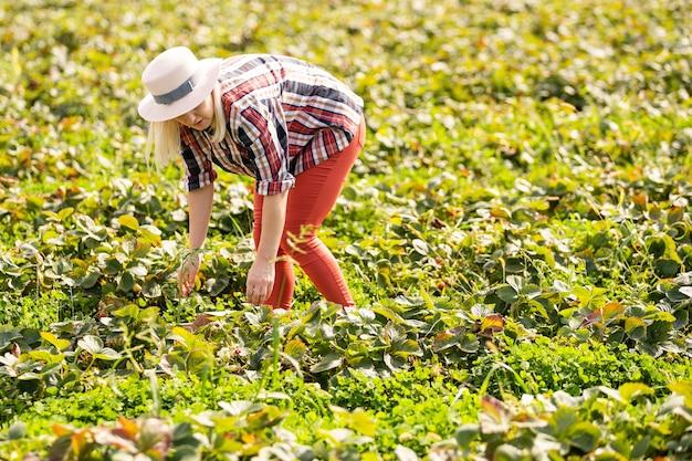 Красивая женщина ест клубнику во время сбора клубники на ферме