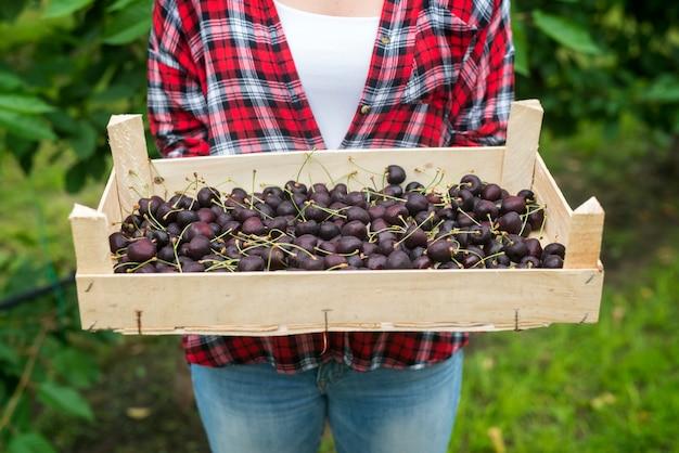Bella donna agricoltore che tiene cassa piena di ciliegie nel frutteto verde
