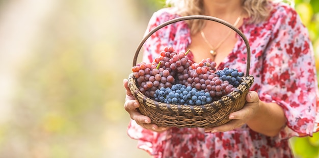 Beautiful woman holds in hands a basket full of tasty grapes.