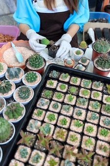Beautiful woman housewife planting cactos in home small gardent with green backgroud. taken with wide angle view.