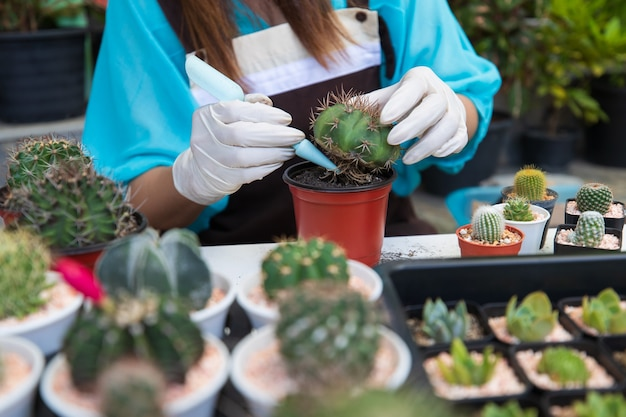 Beautiful woman housewife planting cactos in home small gardent with green backgroud.