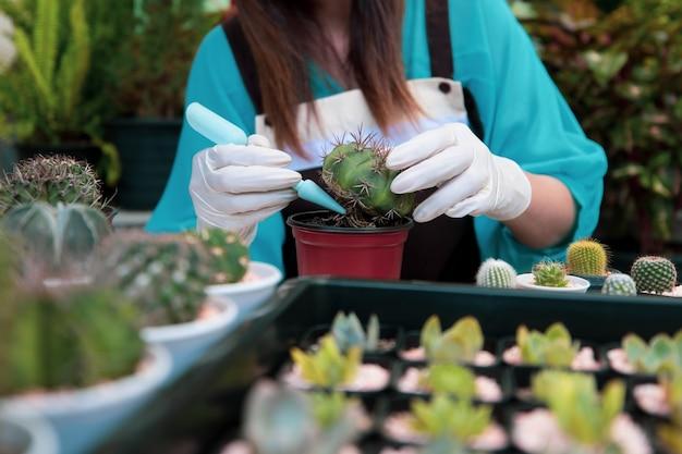 녹색 배경으로 집 작은 gardent에 선인장을 심는 아름 다운 여자 주부.