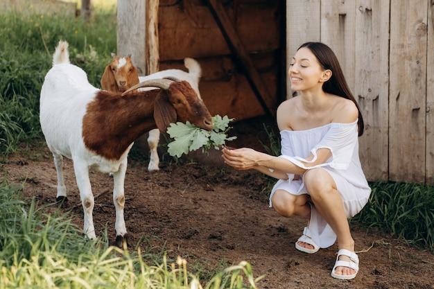 Красивая женщина в белом платье кормит коз и их детей зеленью на эко-ферме.