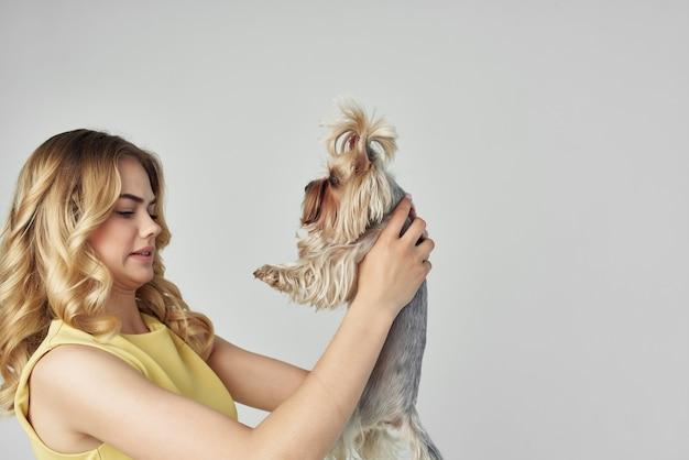 黄色いドレスを着た美しい女性は、小さな犬の光の背景スタジオを楽しんでいます