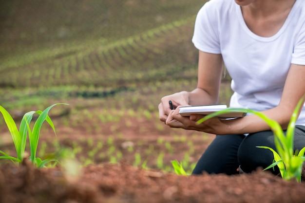 美しい女性の植物の研究者は、トウモロコシの実生の畑で確認し、メモを取っています。