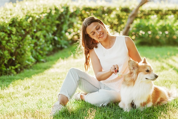 A beautiful woman takes care of her corgi dog and combs its hair on a sunny day on the grass