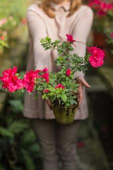 植物に水をまき、温室でガーデニングをする美しい女性。