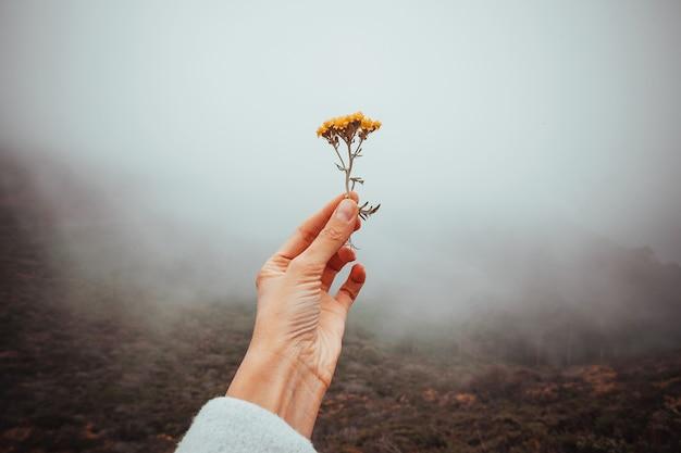 아름다운 여성의 손은 흐린 회색 자연의 배경에 찢어진 꽃을 들고 있다