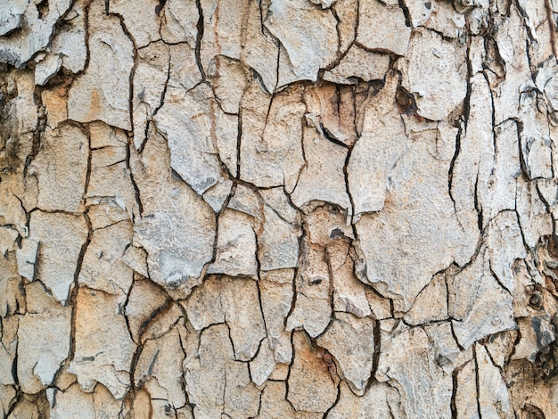Beautiful wooden bark