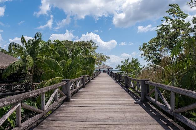 브라질의 흐린 하늘 아래 열대 야자수 사이의 아름다운 목조 다리