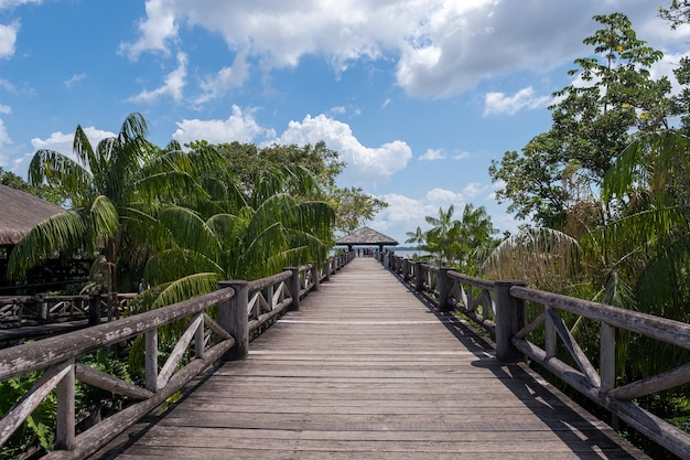 Beautiful wooden bridge among the tropical palm trees under a cloudy sky in brazil