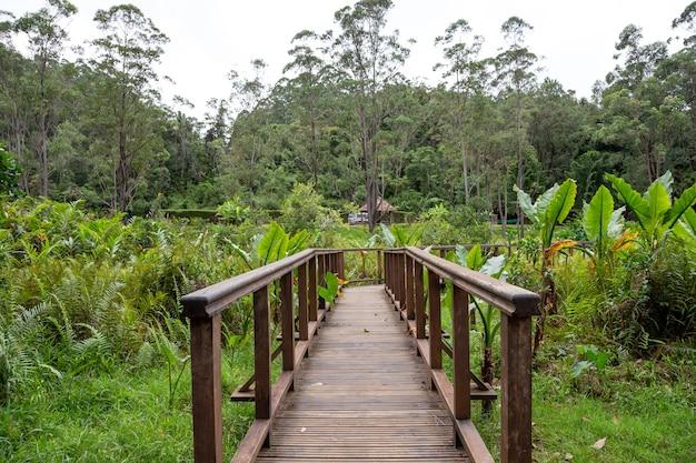 Красивый деревянный мост в джунглях